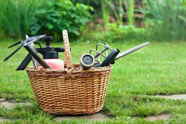 The Best Weeding Tool Options