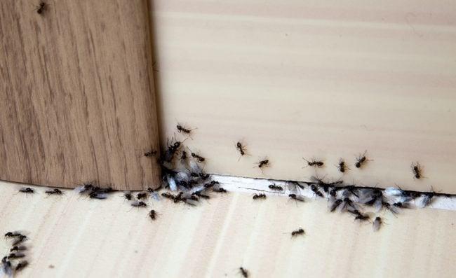 Best Ant Killer Options