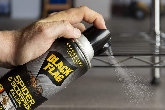 The Best Spider Killer Products